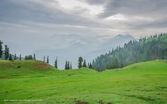 520A1232 (~ilawar) Tags: pakistan mountains green landscape lakes siri greenry kpk kiwai paiy shorgan siripaiy