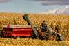Modern Farming Circa 1960 (Thomas DeHoff) Tags: corn harvest picker new idea ih m iowa fall sony a580