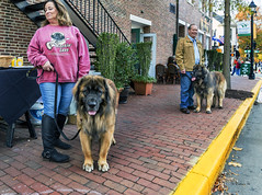 Brian_Big Dogs 1 LG_111116_2D (starg82343) Tags: 2d brianwallace eastonwaterfowlfestival