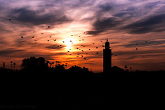Koutoubia Silhouette (Sandy Sharples) Tags: mosque birds flock silhouette sunset dusk cityscape africa h