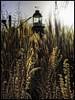 Fireworks - made by - Nature ! (glessew) Tags: gras grass lighthouse leuchtturm phare leuvehaven museum rotterdam nederland netherlands paysbas kraan krahn crane grua
