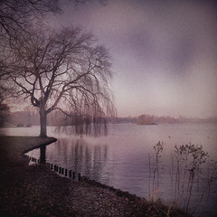 Songs of color (Joylelies) Tags: kralingseplas waterschape tree