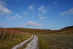 Winter in Rheinhessen (rainbowcave) Tags: kleinwinternheim rheinhessen winter weinberge vineyards landscape landschaft