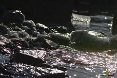 A-LUR_5585 (ornessina) Tags: trasimeno umbria byrd uccelli aironi cormorani toscana va orcia