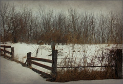Happy Fence Friday (novice09) Tags: fence field farm countryside rural happyfencefriday hff texture winter snow ipiccy