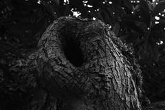 Tree (Maia MacGilp) Tags: nature ansel adams black white lanscapes scotland texture
