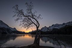 Lake Sils (dam.he) Tags: oberengadin winter engadin graubünden evening frosty lakesils baum tree schweiz switzerland leica sunset cantonofgrisons sils leicaq silsersee gefroren ice