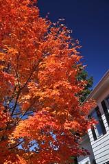 Hot And Ready (cmu chem prof) Tags: mountpleasant isabellacounty michigan autumn fallcolor mapletree circularpolarizer