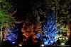 Magic Forest (Sockenhummel) Tags: botanischergarten botanischergartenberlin christmasgarden christmasgardenberlin fuji x30 fujifilm finepix fujix30 zauberwald magicforest bäume trees wald park botanicalgarden nacht night nachtaufnahme beleuchtung bunt forest nadelbäume weihnachten christmas