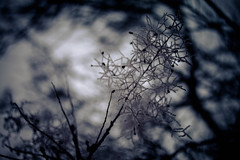 IMG_9979 (outsideartimages) Tags: frost fog winter foliage trees buds moss photography mono bare