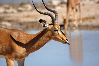 DSC09709 - NAMIBIA 2013