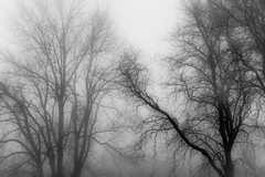 Branches (marcmayer) Tags: blurry black white schwarz weis baum tree nebel misty mist äste ast branches branch nikon d5200 nikkor 50 mm f18 fog haze smog germany deutschland