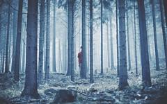 Seek & Hide (Gianfranco Juliano Musso Orquera) Tags: boy portrait art me nature forest photoshop dark photo bosque