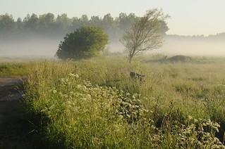 Weide-Landschaft im Morgennebel; Norderstapel, Stapelholm (6)