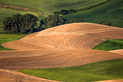Wheat Stubble Patterns (HK Passey) Tags: brown green patterns farming harvest tracks aerialview farmland hills fields farms crops rollinghills stubble easternwashington hillsides palouseregion
