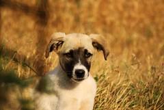 Muttley (Lampetra Tridentata) Tags: dog hund kutya muttley koira littledoglaughedstories