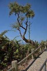 DSC_8341_2048 (a.marquespics) Tags: portugal nikon porto 2870mmf3545d alentejo covo chaparro silvas d600 portocovo sudoeste costavicentina litoralalentejano chaparrito piteiras