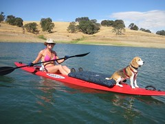 3.4 Kayak with Dog looking out into the water