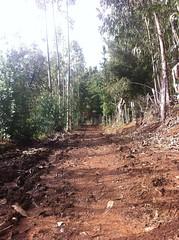 #naturaleza#tqm 💕😊 (krishnna.pincheira) Tags: naturaleza tqm puertosaavedra