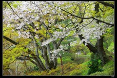 nEO_IMG_DP1U3779 (c0466art) Tags: park old trip travel flowers light green castle pool beautiful japan canon season spring scenery afternoon bloom sakura 2015 trres 1dx c0466art