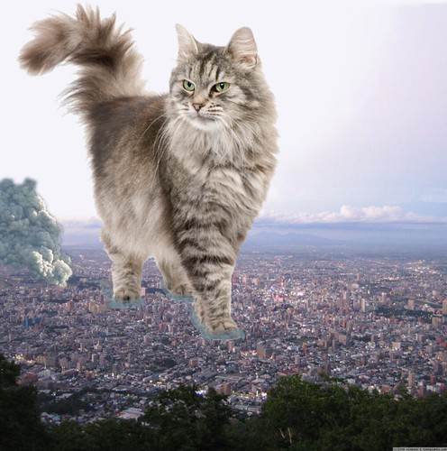educated cat - photo #10