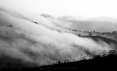 Amaneceres (Ahio) Tags: bw blackwhite blancoynegro bn monochrome pentax k20d niebla landscape fog brumas fumarea asturias paisaje smcpentaxda70mmf24limited gradient lightgradient silhouettes