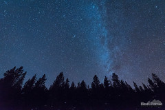 Andromeda Pines (kevin-palmer) Tags: bighornmountains bighornnationalforest wyoming nikond750 tokina1628mmf28 astronomy astrophotography night sky stars starry clear blue dark winter december solstice pine trees highway14 snow andromeda astrometrydotnet:id=nova1869495 astrometrydotnet:status=failed