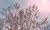 it's a new day HSS (Dotsy McCurly) Tags: new day happy 2017 sycamore tree sky clouds adobe photoshop art hss slider sunday nikon d7200 nj