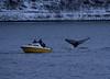 ホエールウォッチング (edo787ak) Tags: d4s ノルウェー norway トロムソ tromso whale クジラ