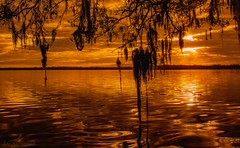 Spanish Moss Rejoicing the Sunrise (JDS Fine Art & Fashion Photography) Tags: dawn monochrome sunrise golden light sunrays sun spanishmoss trees oak