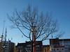 Emden_Ratsdelft_01 (Kurrat) Tags: emden baum winter ratsdelft