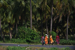 Indien Blog Reise (lustforlifeblog) Tags: michelindien2014 indien blog reise palmen indische frauen