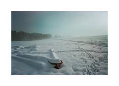 Wood tracks (cardijo) Tags: austria österreich landscape landschaft winter snow schnee sun sonne analog film kodak portra160 canon fd 20mm nikon coolscan colorperfect