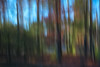 Different Directions (SopheNic (DavidSenaPhoto)) Tags: impressionisticphotography trees color xe1 intentionalcameramovement fuji colorefexpro fujinon35mmf14 icm multipleexposure impressionism