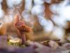 bubble shower (gatomotero) Tags: olympusomdem1 trioplan50 meyertrioplan50mm29 fungi setas ambiente burbujas bublles bokeh nature invierno hielo bosque laminas
