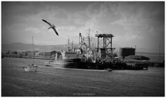 "Old Harbour (Rollingstone1) Tags: portglasgow harbour bay boat seagull outdoor marine port bw blackandwhite mono monochrome inverclyde riverclyde maritime scotland ship ""artinbw dockbay visualart"