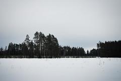 Вид на лес около реки Сестра