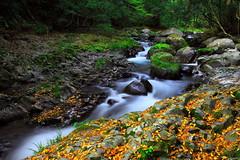 Silky Flow (memories of time) Tags: japan shizuoka izu river water flow 伊豆 河津 rock