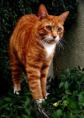 f_gato_1 (ricksoloway) Tags: animals arizonamojo critterpix tucsonarizona cameraphone samsungs6 cats
