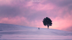 Going Downhill (abhishek.deopurkar) Tags: snow tree alone skiing ski sky pink sunset landscape serene lonely downhill winter evening gulmarg kashmir india