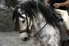 Llevar las riendas (-Instantes- kris) Tags: detalle animal caballo nikon cabeza riendas 70300 montura vaquera d3300 cristinaesteban