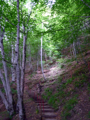 Poienarii citadel climb1500 steps  (2)