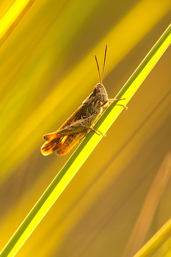 """Insect in the warm light and with lines • <a style=""""font-size:0.8em;"""" href=""""http://www.flickr.com/photos/22289452@N07/19143428490/"""" target=""""_blank"""">View on Flickr</a>"""