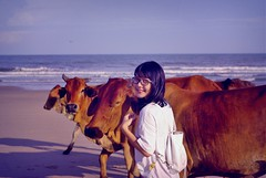 cowsonthebeach (Pham Tran Phuong Thao) Tags: girls love beach animal cow ox vietnam oxes