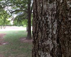 Detail-tree bark