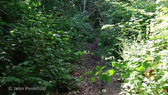 DSC00551 Wenlock Olympian Walk 2015-07-18 - Getting overgrown on the southern section (John PP) Tags: wow shropshire walk miles 50 challenge wenlock olympian marches 2015 muchwenlock ldwa johnpp 180715