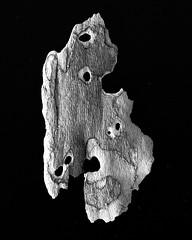 IMG_4979 - Version 2 (j.towbin ) Tags: bw macro texture nature faces holes bark minimalsim allrightsreserved