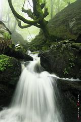 Lost river (Hector Prada) Tags: musgo rio niebla paísvasco encantado hayedo 40d hectorprada