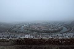 saar winter 2 (Denkrahm) Tags: denkrahm saar vineyards winter schleife wiltingen kanzem