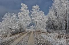 frosted time (drummerwinger) Tags: trees bäüme 2017 neujahr silvester rot reif kalt canon700d gaden erding snow nebel cold ice natur frost landschaft landscape winter